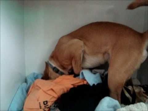 Dog looking for mice in the closet