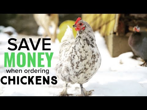 How To Save Money when Ordering Chickens