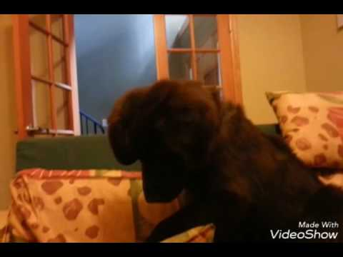 Naughty Puppy Won't Get Off The Couch!