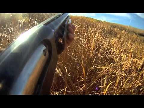 GoPro Shotgun