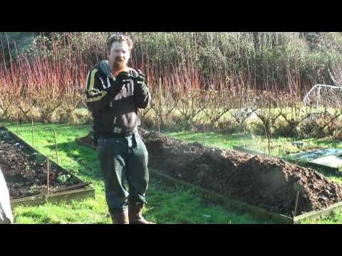 How to use FRESH horse manure on the garden