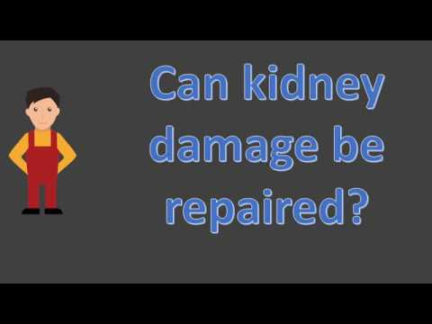 Can kidney damage be repaired ?