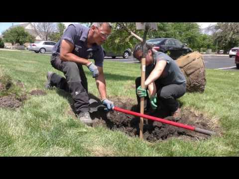 Best Practices - Tree Planting Part 1