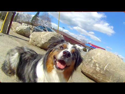 Our Afternoon Walk | ServiceDog Vlog