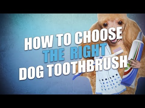 How to Choose the Best Toothbrush for Dogs