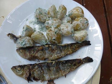 Sardines cooked in the Tandoor