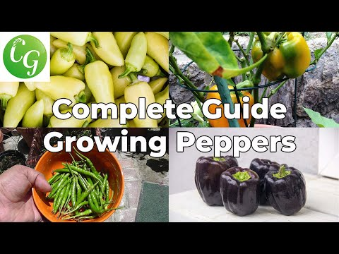 Pepper Growing Tips - The Complete Guide To Growing Great Peppers