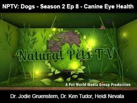 Natural Pets TV - Dog Edition - Episode 8 - Canine Eye Health & it's associated body sysems+ more...