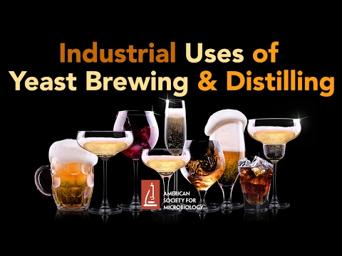 Industrial Uses of Yeast Brewing and Distilling - Graham Stewart, PhD