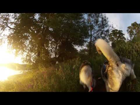 PAWTREKKER Extreme Urban Mushing @ Folsom Lake CA Dog Scootering