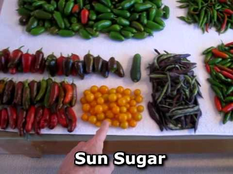 Fall Garden Harvest Food Storage Yields Dehydrated Peppers Tomatoes Herbs