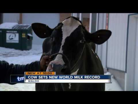 Wisconsin cow sets world record for milk production