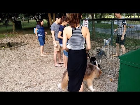 BIG Dogs Fighting in Dog Park