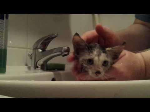 Lost kitten found in the garages - bathing