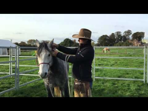 Guy Robertson - Haltering your horse using a rope halter