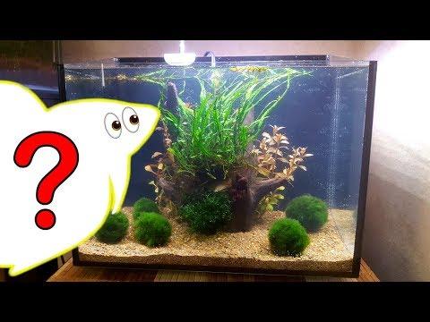 HELP! FINALLY GETTING A BETTA FISH!