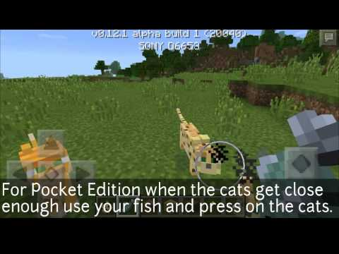 Minecraft Pe: How To Tame An Ocelot (Read Desc)