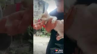 Kode alam kucing ketabrak 4d/ Videos - Veso Club