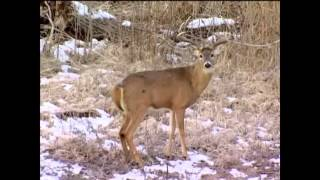 Bow hunt kill compilation. 43 kills