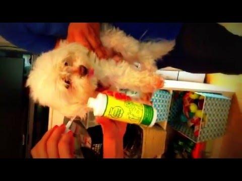 Dogs Reaction to Grannicks Bitter Apple Spray | www.KeepDoggieSafe.com