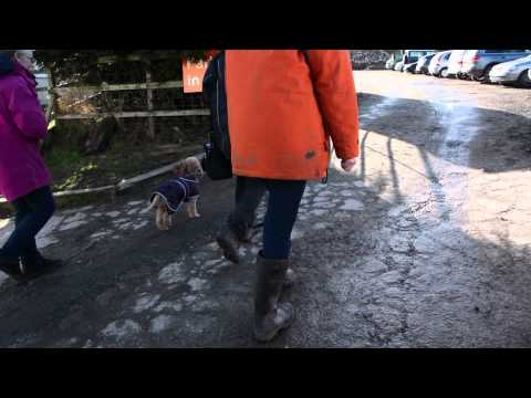 North Clwyd Animal Rescue - Corporate Video