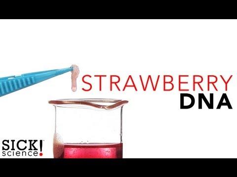 Strawberry DNA - Sick Science! #114