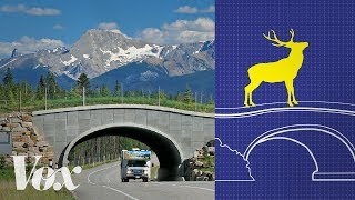 wildlife crossings stop roadkill why arent there more