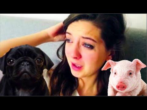Is ZOELLA a Hypocrite? Nala PUG vs PIG