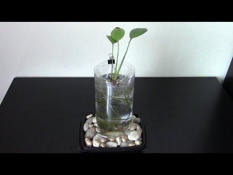 DIY Aquarium of plastic bottle improved