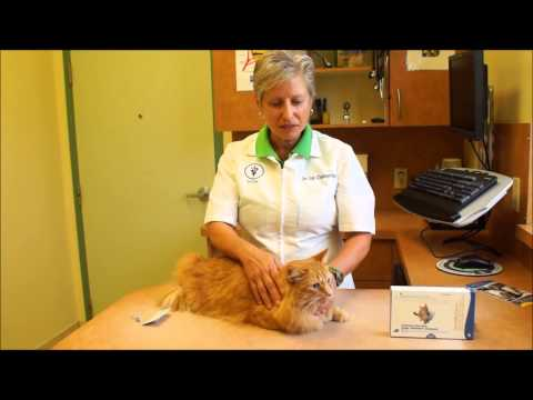 Flea Treatment for Cats!!  How to Apply Revolution for Cats