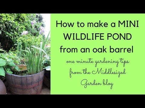 How to make a mini wildlife pond in an oak barrel