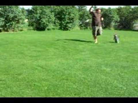 Backflip bengal cat