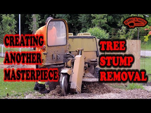 Stump Grinder Best Professional Grinding Removal Service I Have Ever Used