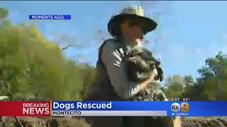 Dogs Rescued From Montecito Home Overrun By Mud
