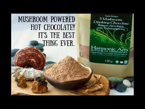 5 Mushroom Drinking Chocolate | Harmonic Arts