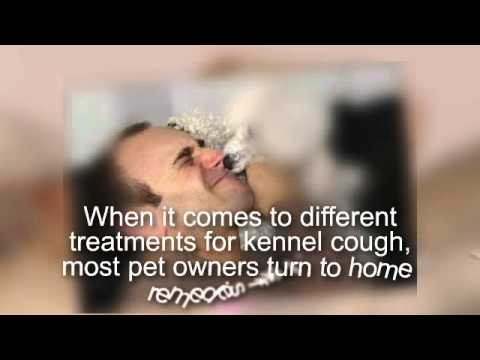 Treating kennel cough in your dog