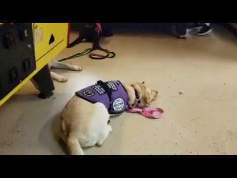 Service Dog Visits The Arcade