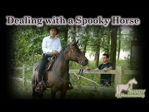 Dealing with a spooky Horse