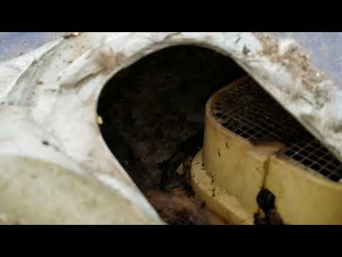 Remove mice mouse urine smell from Ford truck vents