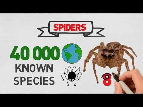 Spider Control in Miami - Toro Pest - Call: 305-594-4767