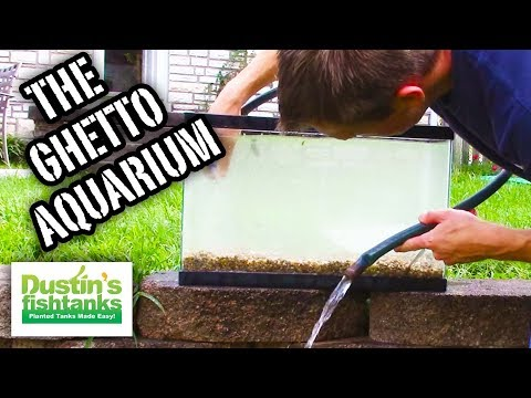 How To Setup a Ghetto Aquarium, the
