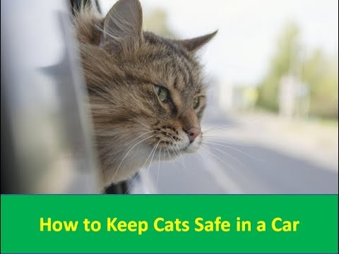 How to Keep Cats Safe in a Car - car and driver