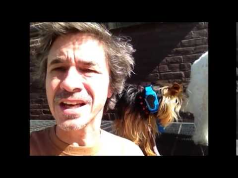 Wee Wee Pads, how to get dog to go outside ..........Peter Caine dog training