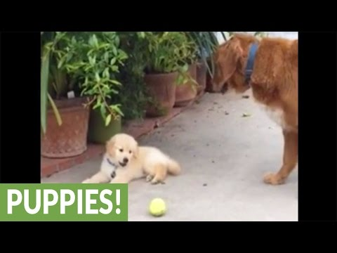 Excited puppy has very short attention span