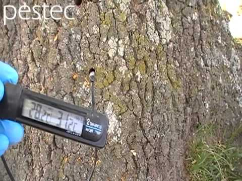 Trees have termites nests inside! we can check them.
