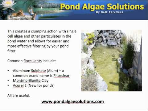 Pond Tips - How To Clear Green Or Murky Water