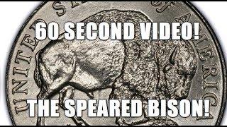 2005 Speared Bison Jefferson Nickel Videos - 9videos tv