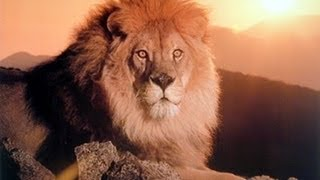 Be Like a Lion! ᴴᴰ ┇ Must Watch ┇ by Br. Mustafa Hosny ┇ The Daily Reminder ┇