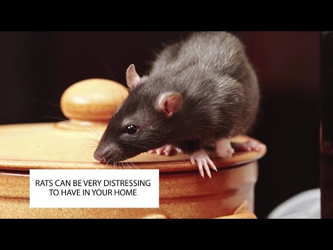 HOW TO GET RID OF RATS IN THE HOUSE ~ RAT CONTROL UK ~ CATCH-IT LTD