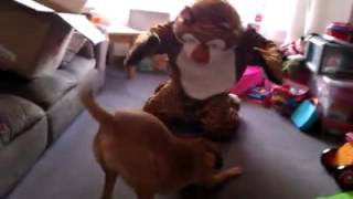 Oscar the dog fighting the tiger who came to tea
